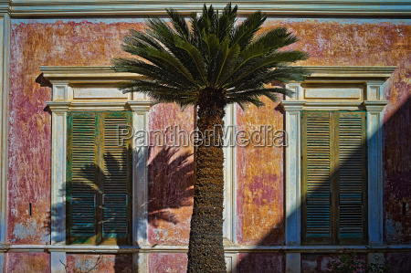 italy apulia palm tree in front