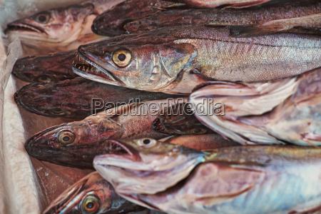 italy apulia fresh fish hake in