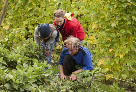 austria schiltern alternative gardeners at work