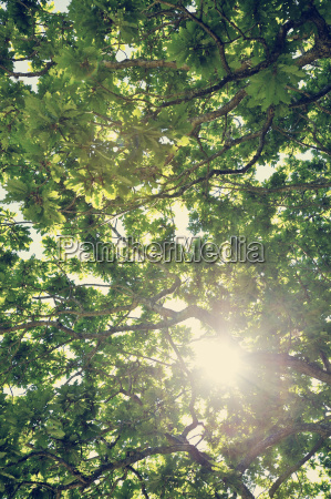 sweden moelle sun shining through crown