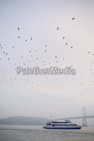 usa california san francisco seagulls and