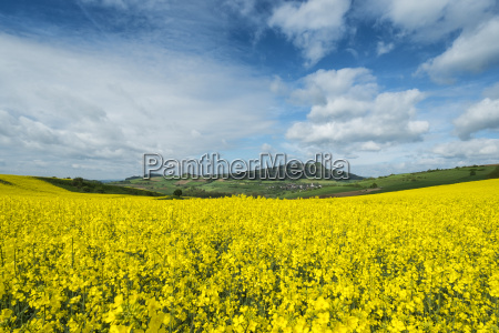 germany baden wuerttemberg view of yellow