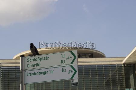 germany berlin bird sitting on direction