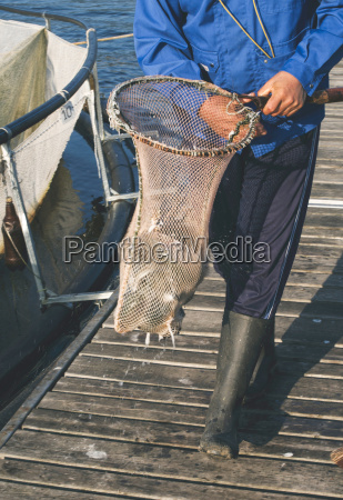 catching fish with landing net