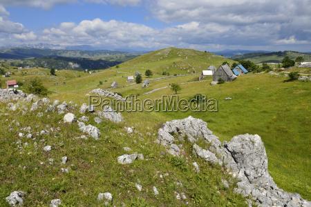 montenegro crna gora sherperd villige crna