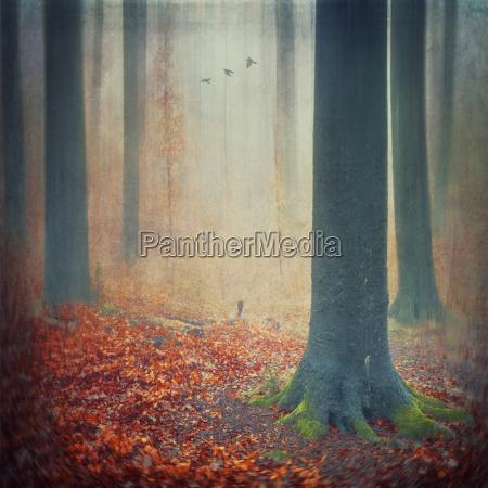 efteraret skov med rod lov daekker
