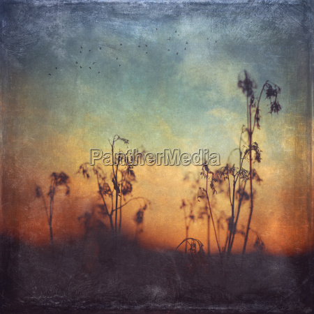 germany silhouette of dried grasses at