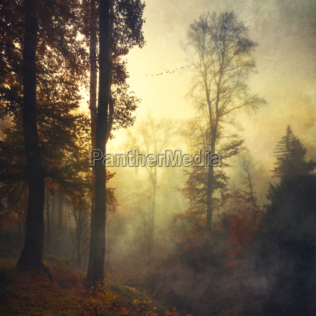 germany near wuppertal deciduous forest in