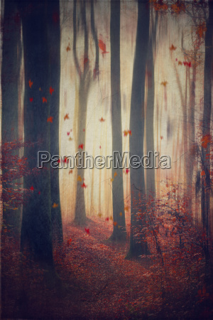 falling leaves in autumnal forest