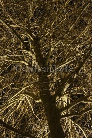 switzerland view of tree at night