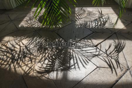 belgium oak parquet with palm tree