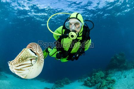 oceania palau diver watching palau nautilus