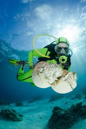 oceania palau diver watching palau nautilusses