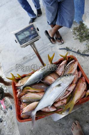 mexico cancun fishmonger weighing fish