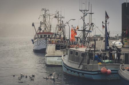 germany schleswig holstein eckernfoerde fishing boats
