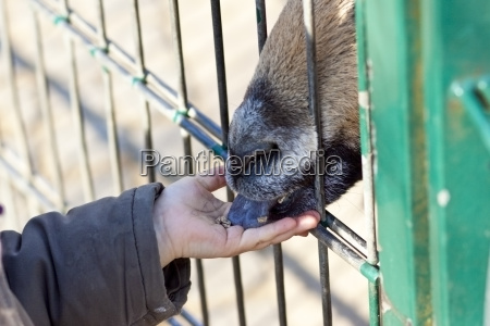 germany kiel girl in zoo feeding
