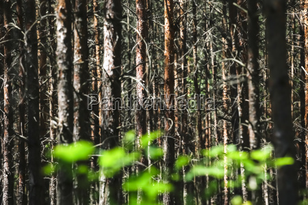germany saxony forest with new plants