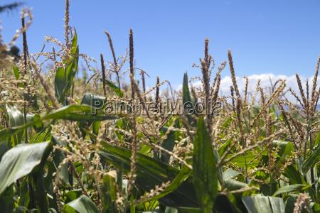 blatt baumblatt landwirtschaft ackerbau wolke outdoor