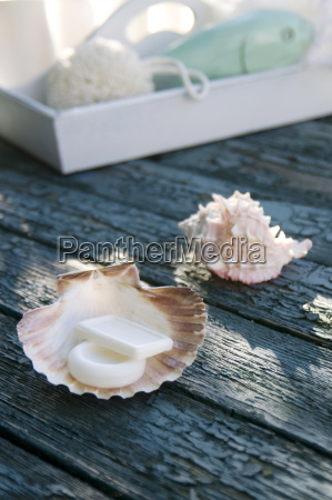 scallop used as soap dish