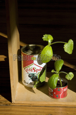 preserve cans used as nursery pots
