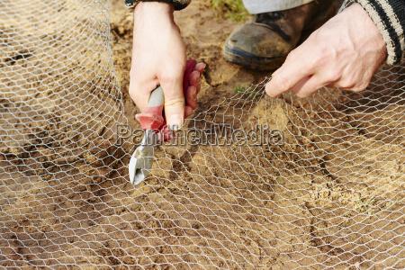 gardener cutting a chicken wire