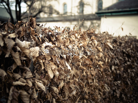 germany munich dry leaves in front