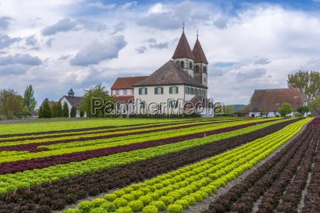 germany baden wuerttemberg reichenau island lettuce