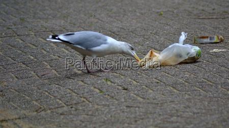 nerthlands, , herring, gull, ransacking, trash - 21098485