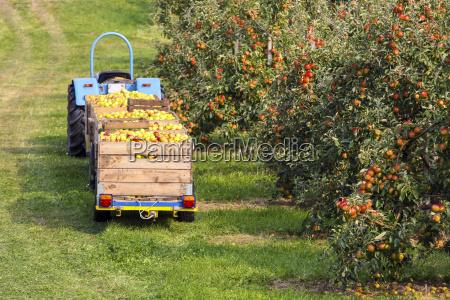 germany hamburg altes land apple picking