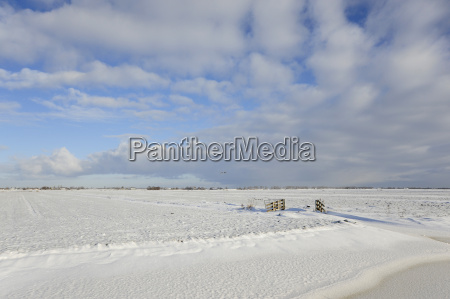 netherlands view of polder covered with