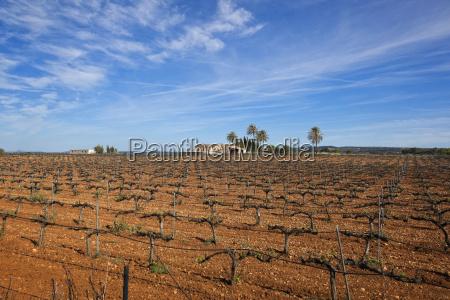 spain mallorca view of farm land