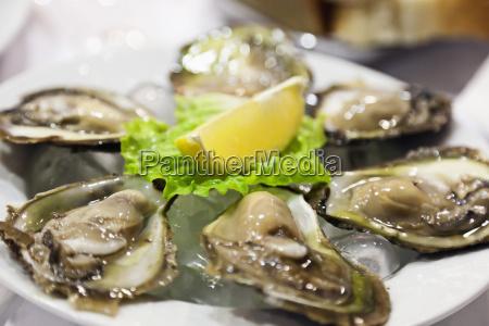 croatia mali ston fresh oysters in