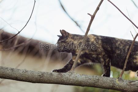 tabby cat walking on tree branch