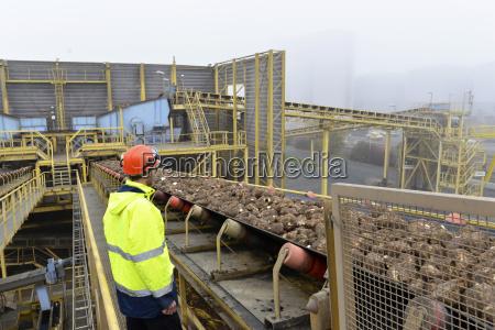 worker at conveyor belt with sugar