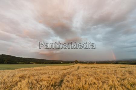 germany rhineland palatinate neuwied rommersdorf field