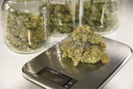 studio marijuana drugs on digital scale