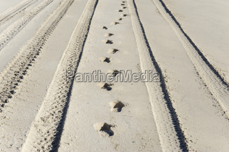 australia western australia lancelin footprints and