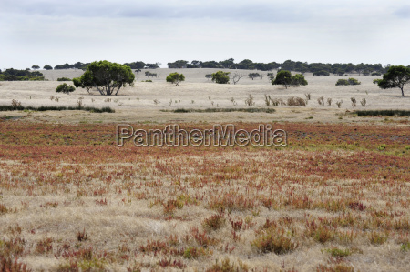 australia south australia coorong district deserted