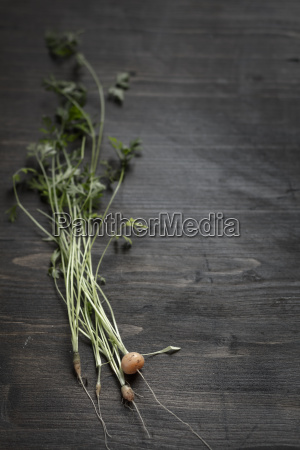fresh baby carrots with stems and