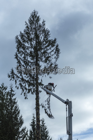 canada north vancouver woodsman cutting trees