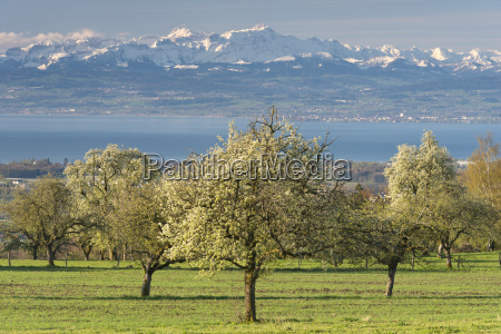 germany view of fruit trees in