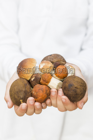 childs hands holding different wild mushrooms