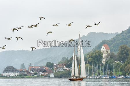 germany baden wuerttemberg lake constance sailing