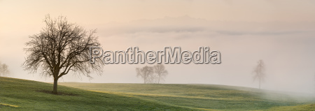 germany markdorf bare trees and meadows
