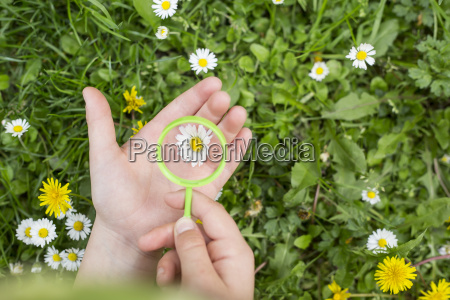 hands of girl holding on daisy