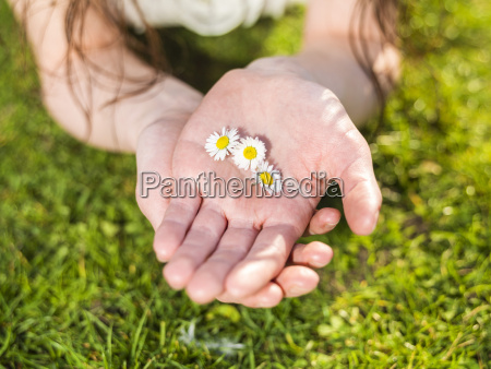hand of woman holding daisy blossoms