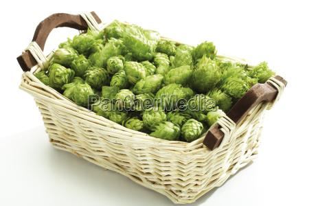 hop umbels in basket