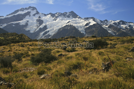 new zealand grassland snow covered mountains