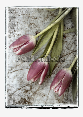 collage of tulips with texture