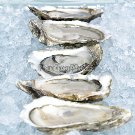 oysters on crushed ice close up